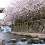 九州花火師競技大会 小浜