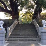 福山雅治 「クスノキ」のモデル山王神社のクスノキと片足鳥居。