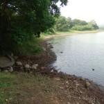 諏訪の池 減水しています