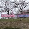長崎市内でお花見するなら立山公園がおすすめな8つの理由!