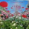 ハウステンボス バラ祭開催中5月5日より6月13日まで