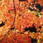 長崎市のおすすめ紅葉スポット特集ランキング