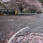 長崎の桜の名所、お花見マップ作成してみた!
